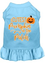 Cutest Pumpkin in the Patch Screen Print Dog Dress Baby Blue XS