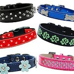 One Love Sale  - Collar Lot <br> $300 worth of assorted collars for $100 <br> Retail value over $600!